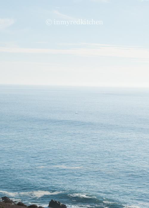 walvis 2